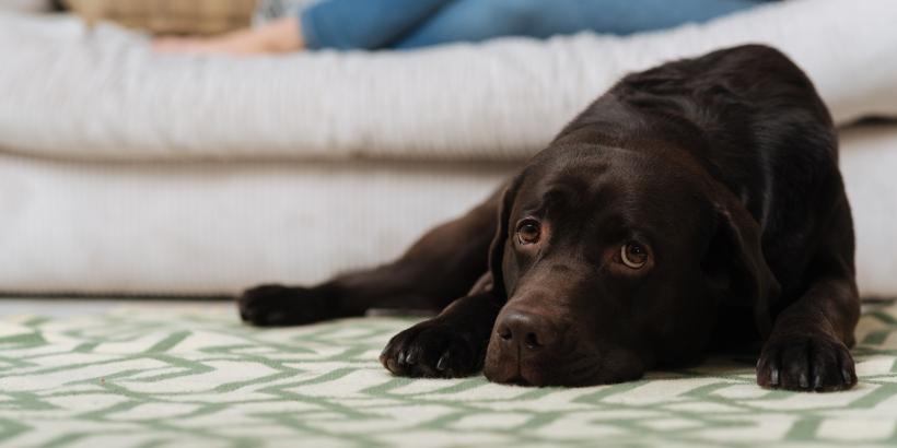 犬や猫などのペットを飼っていたマンション売却で気をつけたい3つのポイント