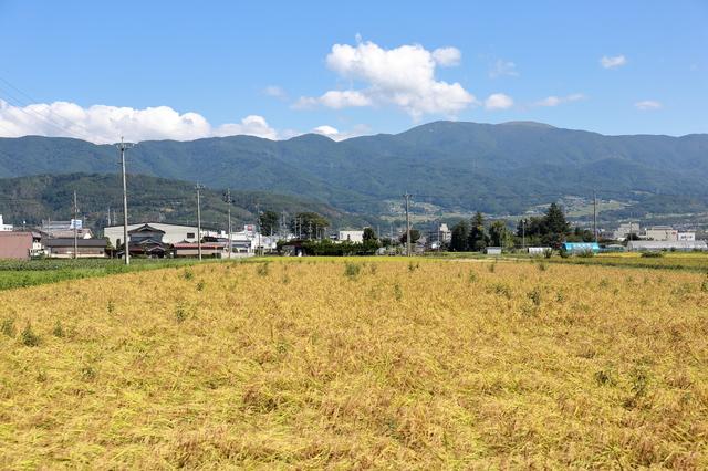 田舎の土地が売れない4つの驚くべき理由|売却する方法はある?